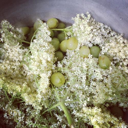 Gooseberry and elderflower