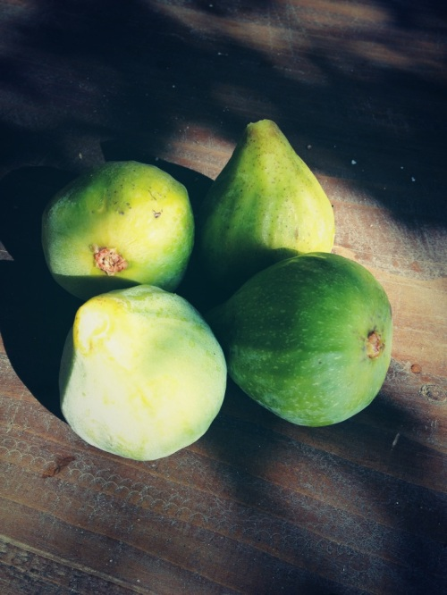 Figs fresh from the tree